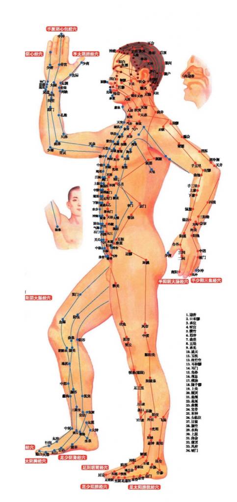 cuerpo humano medicina china