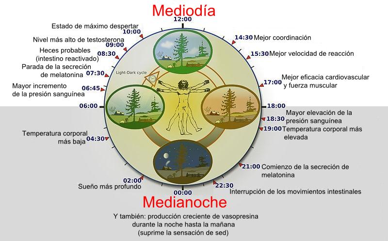 mediodia