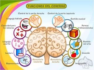 cerebro-chino